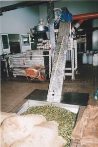 Die Oliven werden in Säcken in der Ölmühle angeliefert.