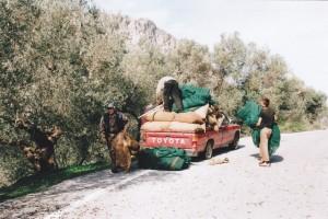 Die Oliven werden in Säcke abgefüllt und mit dem Pickup in die Ölmühle gefahren.