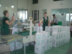 Olivenölkartons am Ende der Terra Creta Produktionsstraße