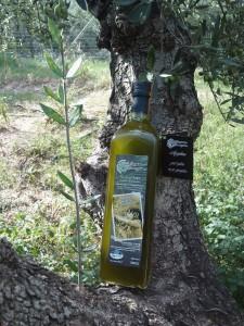 Olivenöl Frühabfüllung