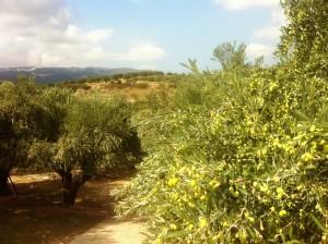 Sitia Bio Olivenöl